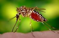 Alerta : Mato Grosso tem mais de 49 mil casos registrados de dengue e zika