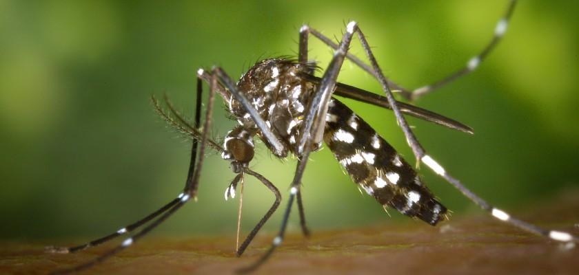 Aedes: Saúde divulga dados sobre situação epidemiológica em Mato Grosso