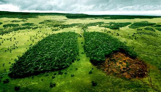 MT:Ouvidoria da Secretaria de Meio Ambiente atendeu 823 solicitações em 2015