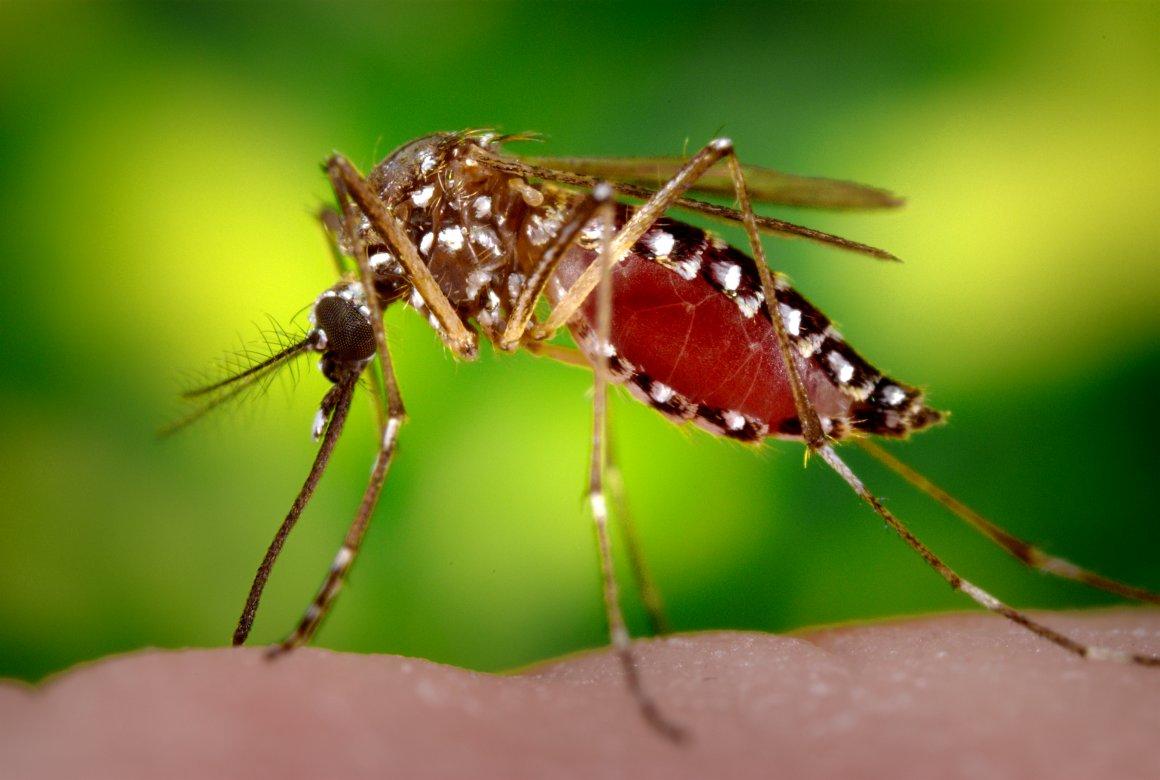 Quais são os riscos e sintomas da síndrome de Guillain-Barré, outra doença associada ao zika