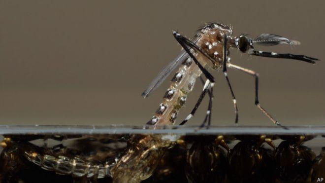 Por que mosquitos picam algumas pessoas mais que outras?