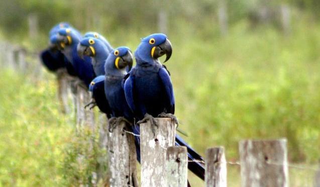 Feira oferece diversas opções para o turismo mato-grossense