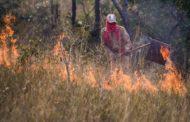 Primeiro mês registra aumento de 101% de focos de calor