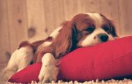 Não há travesseiro mais confortável do que uma consciência limpa