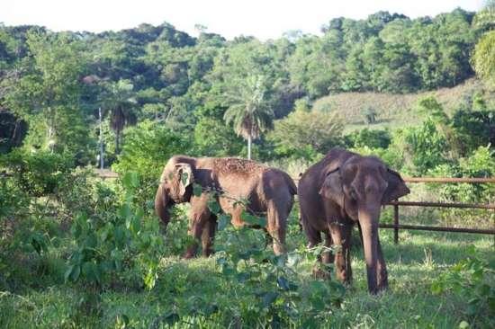 Elefantas ganham nova casa em Mato Grosso