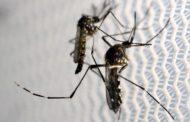 Pesquisa indica que El Niño contribuiu para epidemia de zika na América do Sul