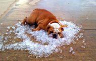 Até arroz congelado: veja como deixar a casa mais fresca no verão