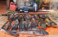 Pescados apreendidos serão destinados às entidades filantrópicas