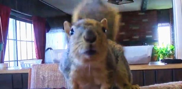 Esquilo impede roubo de armas por adolescente nos EUA