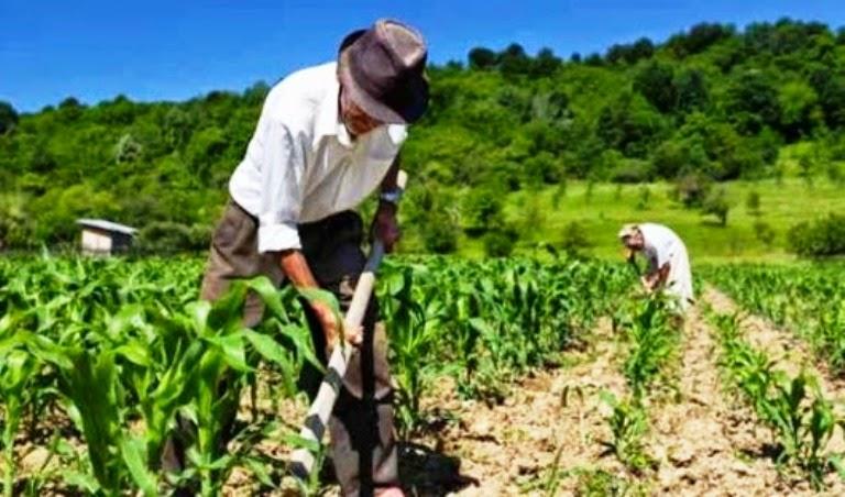 Lei do deputado Eduardo Botelho beneficia agricultura familiar