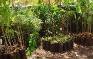 Meio Ambiente e Ação Verde plantaram mais de 3 mil mudas em Várzea Grande