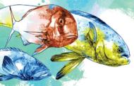 Conheça os benefícios de 40 tipos de peixe