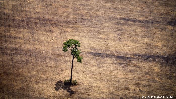 Dossiê denuncia perigoso retrocesso na legislação ambiental brasileira