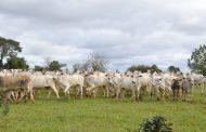 Ações conjuntas na fronteira Brasil-Bolívia visam proteger rebanho mato-grossense