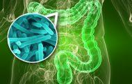 Microbiota Intestinal e Sistema Imune na Obesidade e Diabetes tipo 2: Descoberta de Novos Alvos Terapêuticos