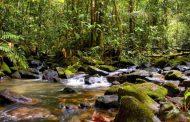 Juiz suspende decreto que extingue reserva nacional na Amazônia