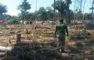 Desmatamento na Amazônia caiu 16% no último ano