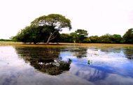 Pantanal recebe da Unesco certificado de Reserva da Biosfera