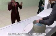 Casal chinês é flagrado com 200 baratas vivas em mala de mão no aeroporto