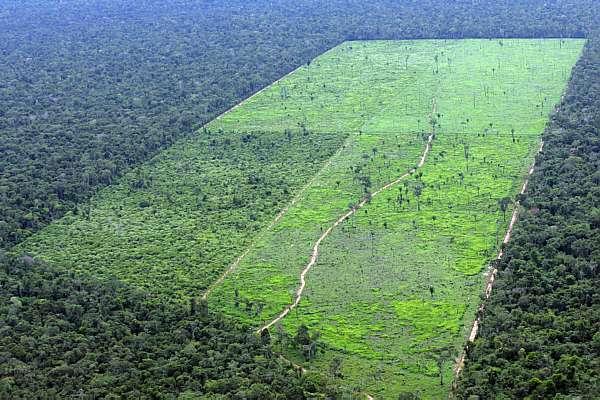 Brasil é um dos cinco países do mundo que mais vende terra para estrangeiros