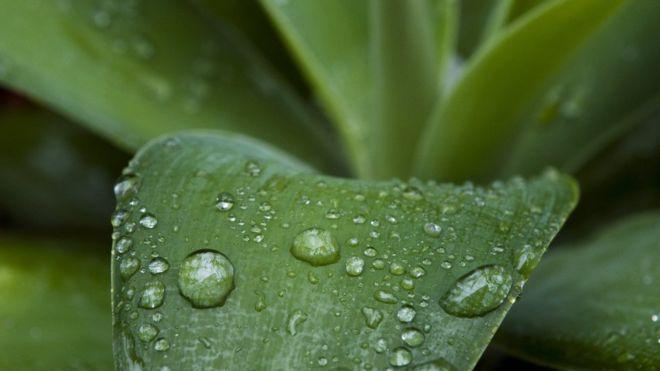 Por que o 'cheiro' da chuva é tão bom?