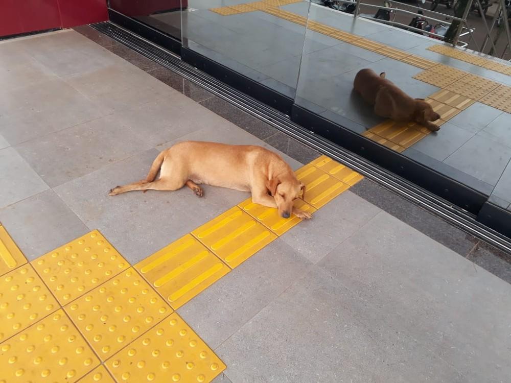 Cachorro espera por quase 7 horas dona que fazia Enem