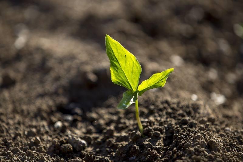 Brasil amplia área agrícola que usa técnicas sustentáveis