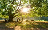 Contato com a natureza melhora a saúde mental, mostra estudo