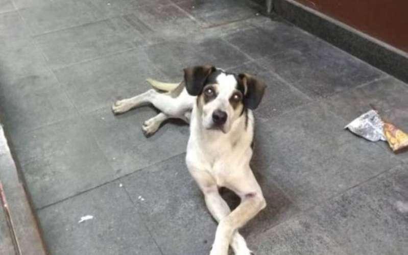 Segurança do Carrefour confirma agressão a cachorro e diz estar arrependido em depoimento
