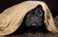 8 dicas para reduzir o estresse dos animais durante as datas festivas