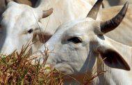 Estudo recomenda plantio sustentável para garantir segurança alimentar