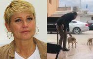 Xuxa divulga vídeo de homem esfaqueando cachorrinho brutalmente e deixa todos em pânico