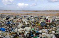 Plástico no oceano: baleia é encontrada morta com 40kg de sacolas no estômago