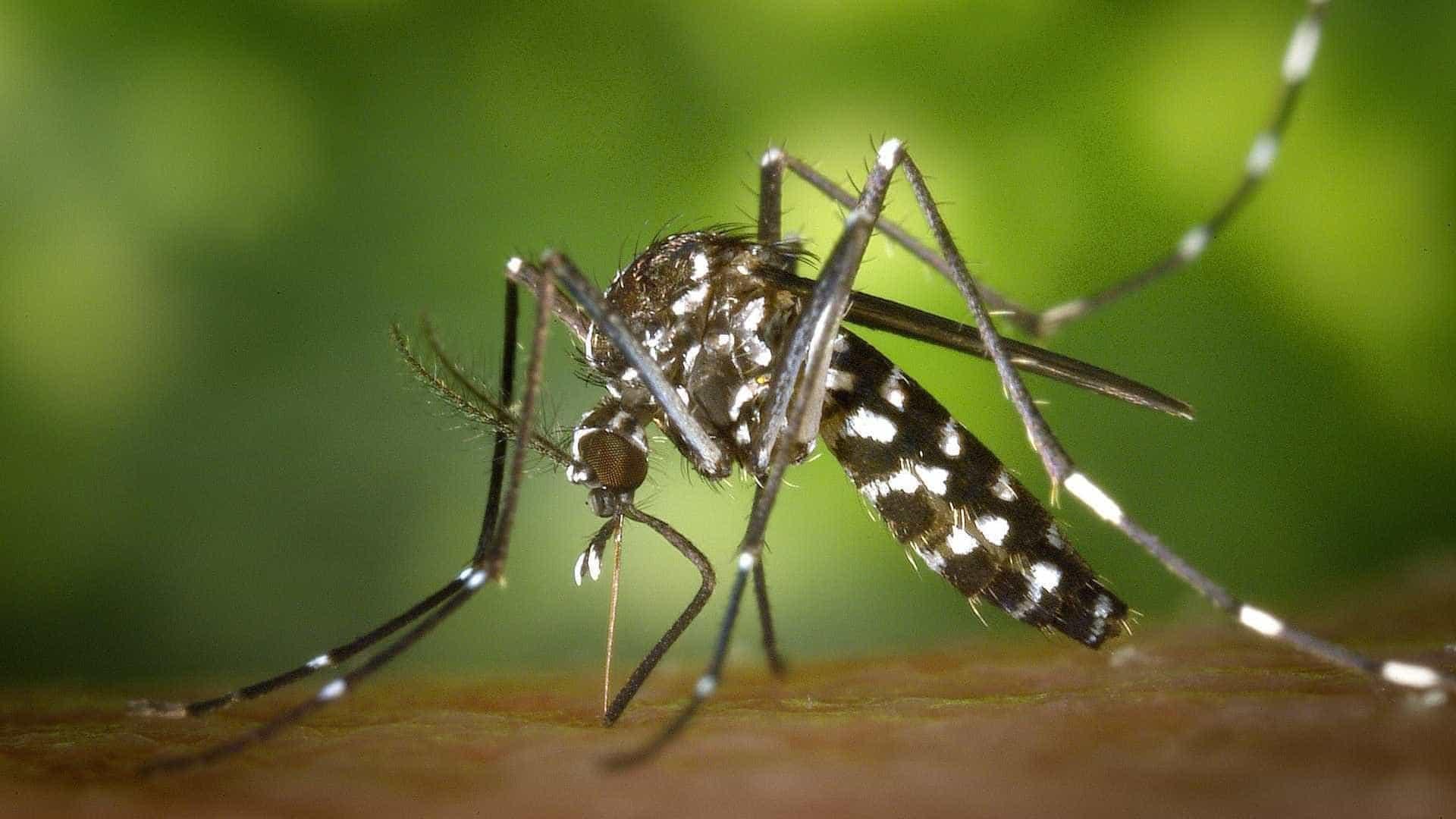 Chikungunya passou despercebido no país durante um ano, aponta estudo