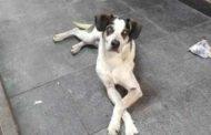 Carrefour terá que pagar R$ 1 milhão após morte de cadela Manchinha
