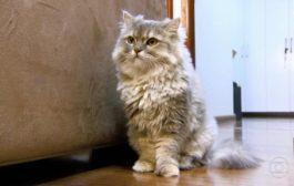 Dona de gata ganha na Justiça direito de manter animal em condomínio