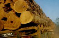 Mais de 600 cientistas pedem que UE pressione Bolsonaro contra desmatamento no Brasil