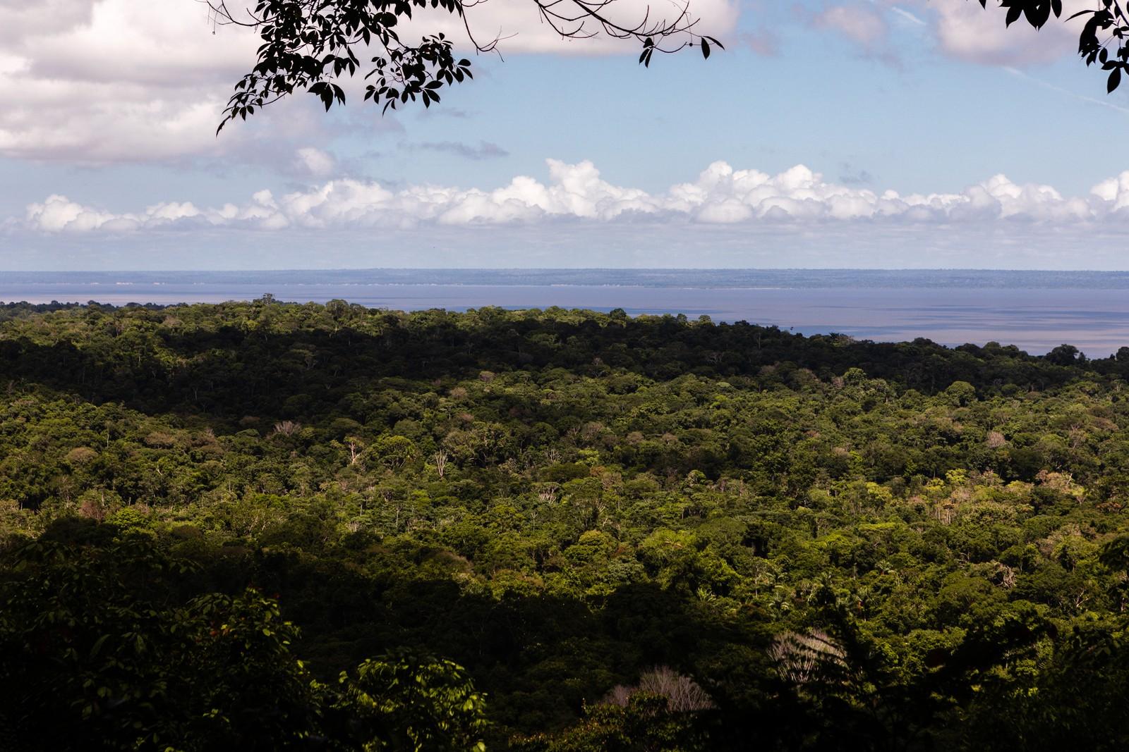 Áreas da Amazônia que deveriam ter 'desmatamento zero' perdem 6 cidades de SP em três décadas