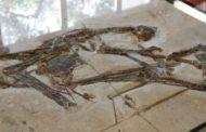 Redes internacionais de tráfico de fósseis prejudicam pesquisa científica e patrimônio natural do Brasil