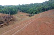Brasil e EUA lideram retrocessos ambientais, aponta estudo que abrange mais de um século