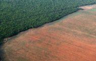 Noruega irá bloquear verba para o Fundo Amazônia, diz jornal