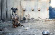 Projeto de lei quer que animais de rua sejam