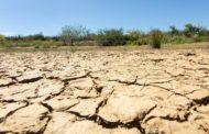 Desertificação atinge 13% do semiárido brasileiro e ameaça conservação da caatinga
