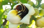 Brasil conclui testes de soro inédito para picadas múltiplas de abelha