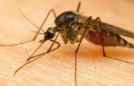 Dengue será epidemia global em 2080: América do Sul está entre maiores atingidos