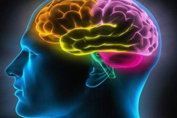 Cientistas descobrem proteína no cérebro que pode ligar Alzheimer aos ...